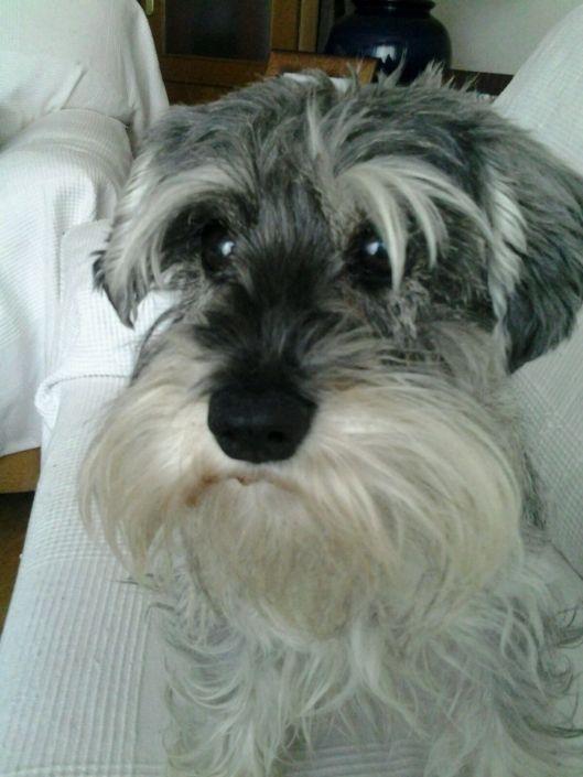 veterinario-ojos-cvlejarza