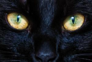 oftalmologia-veterina-cvlejarza