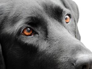 cvlejarza-oftalmologia-veterinaria