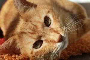 medicina-felina-cvlejarza